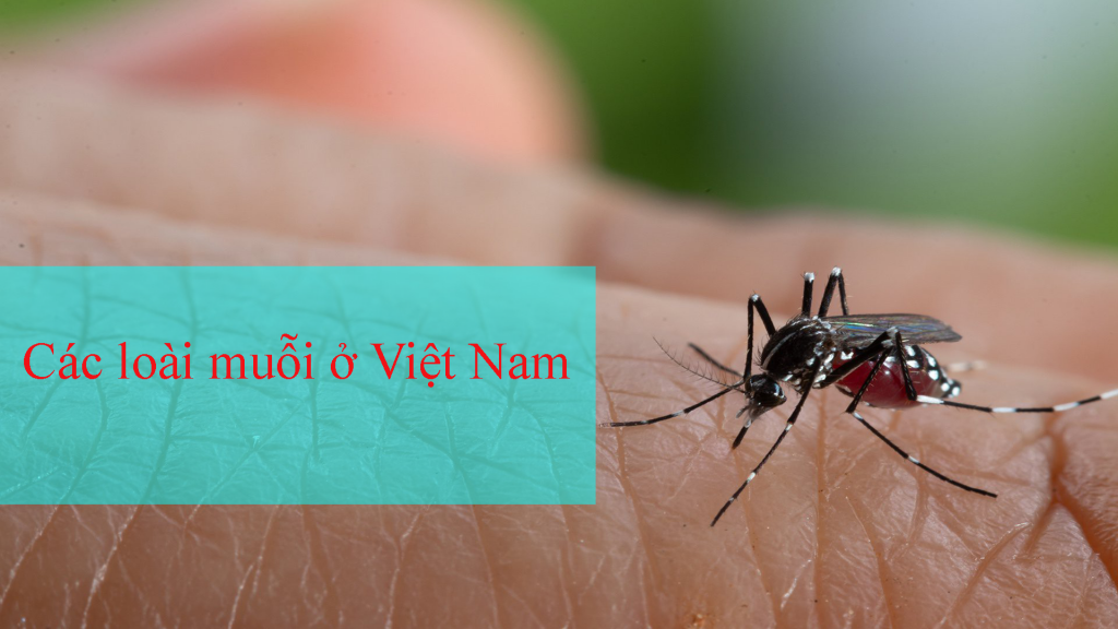 Các loài muỗi ở Việt Nam