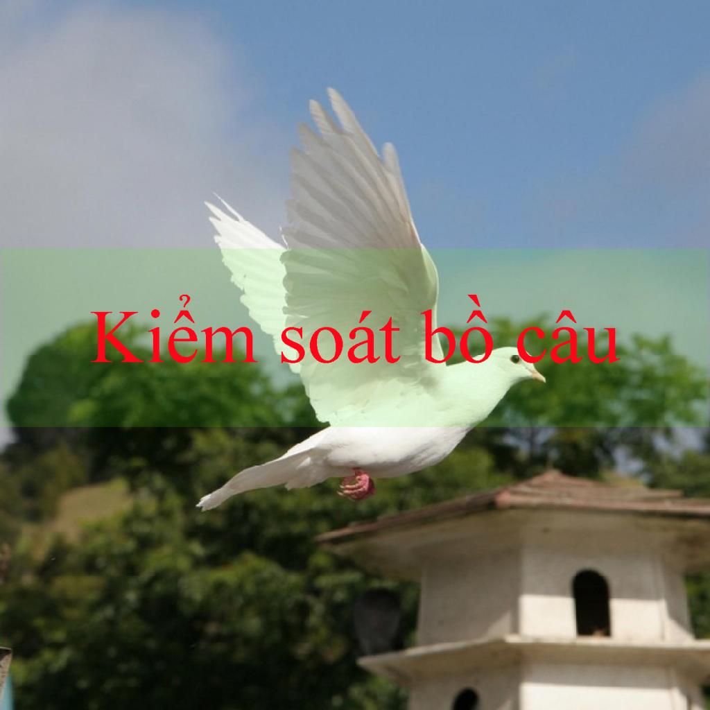 Cách đuổi chim bồ câu đúng cách