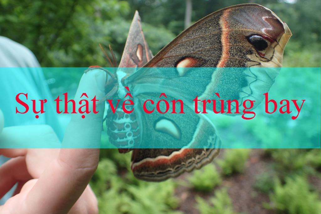 Sự thật về côn trùng bay