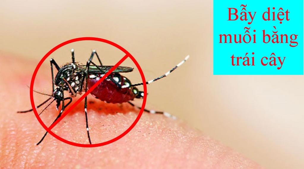 cách làm bẫy muỗi đơn giản bằng trái cây