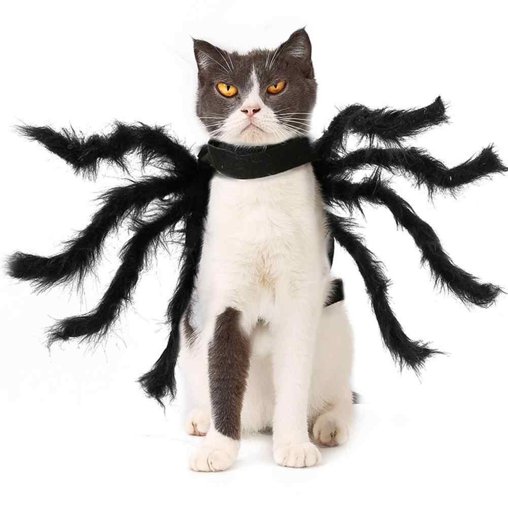 mèo đuổi nhện