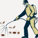 Cách diệt côn trùng trong nhà an toàn hiệu quả