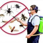 Danh sách những loại côn trùng xuất hiện trong nhà